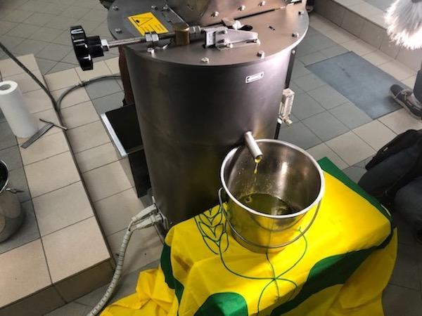 olio-da-olivo-leccino-resistente-a-xylella-28ago19-fonte-coldiretti-puglia.jpg