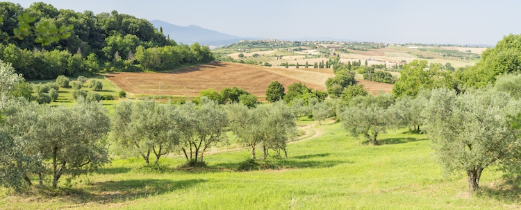 olivi-ulivi-olivicoltura-by-sergejson-fotolia-750