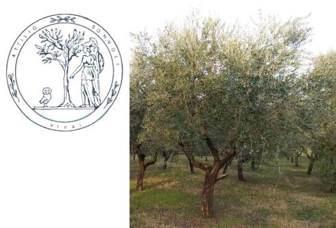 olivo-cv-minerva-logo-vivai-sonnoli-by-matteo-giusti-agronotizie-jpg.jpg