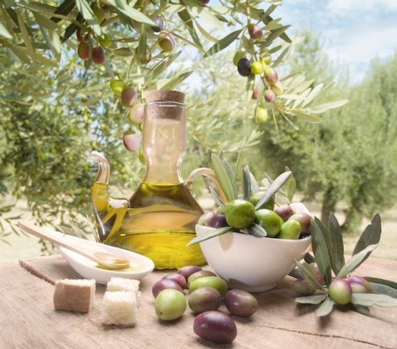 olivo-e-olio-fonte-progetto-ager-agrolimentare-e-ricerca.jpg