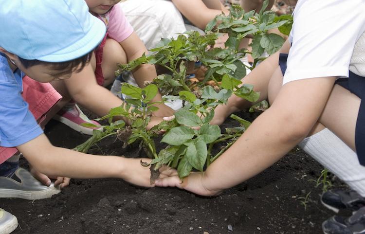 orti-didattici-bambini-agricoltura-didattica-by-rosmarino-fotolia-750
