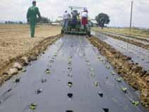 ortofrutta-materiali-biodegradabili-convegno-marzo2011