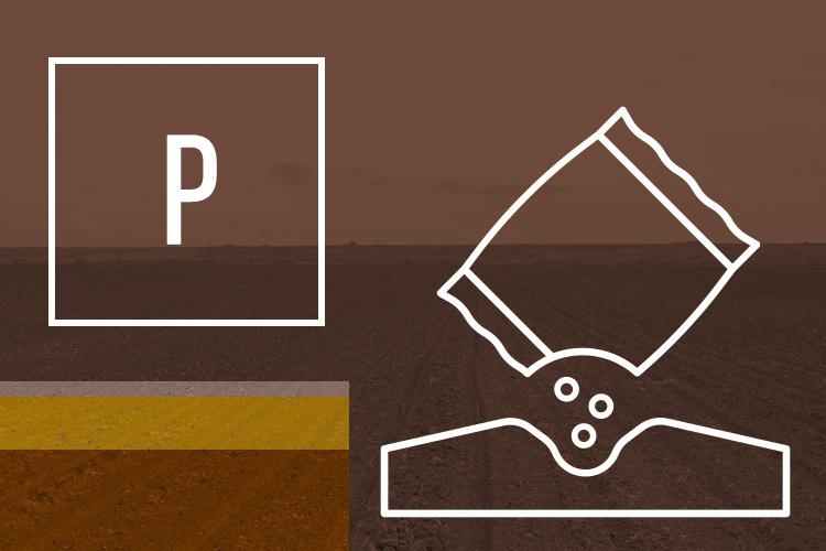 p-fosforo-ciclo-art-tommaso-c-su-concimi-npk-dic-2020-fonte-agronotizie