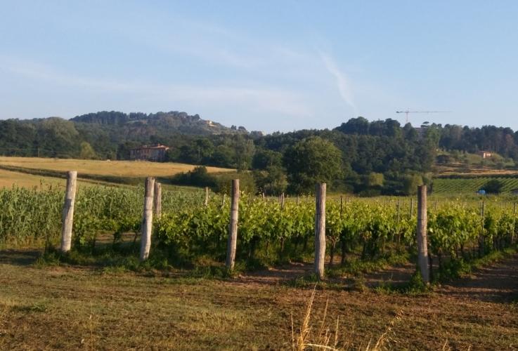 paesaggio-agricoltura-campagna-vigneto-by-matteo-giusti-agronotizie-jpg