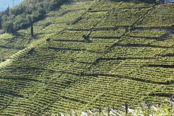paesaggio-agricoltura-fonte-unibz.jpeg