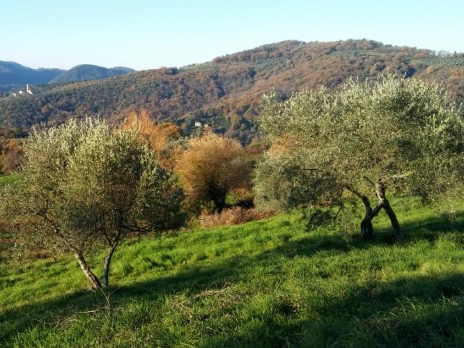 paesaggio-toscana-inverno-by-matteo-giusti-agronotizie