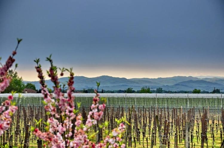 panorama-colline-romagna-pianura-appennini-pesco-fiore.jpg