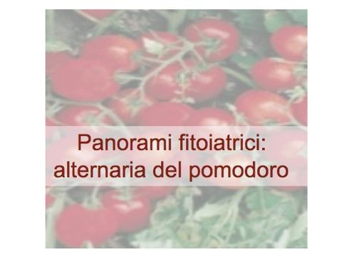 panorami-fitoiatrici-alternaria-pomodoro