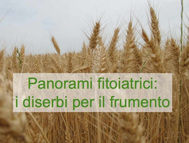 panorami-fitoiatrici-diserbi-cereali1