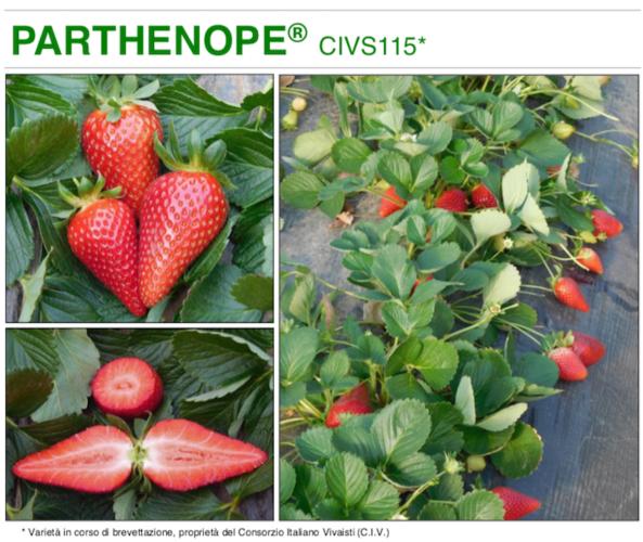 parthenope-fonte-civ-consorzio-italiano-vivaisti