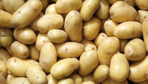patata-crpv.jpg