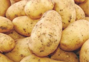 patata-fonte-compo