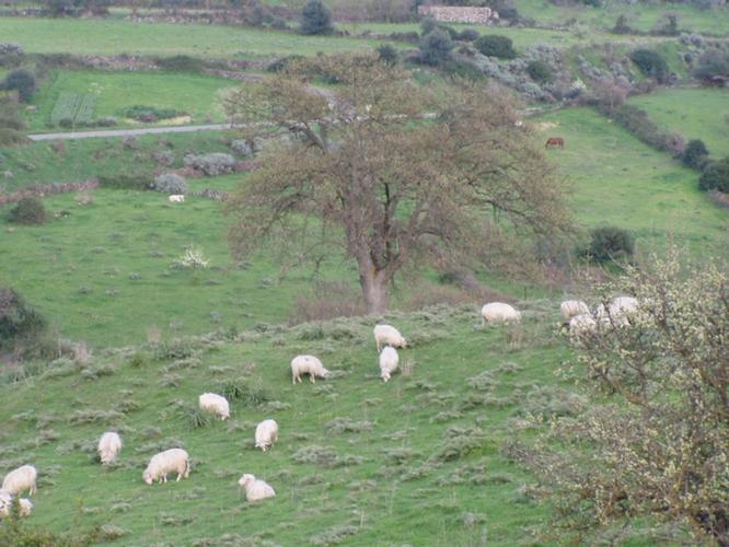 pecore-al-pascolo-orroli-nuoro-fonte-izs-sardegna