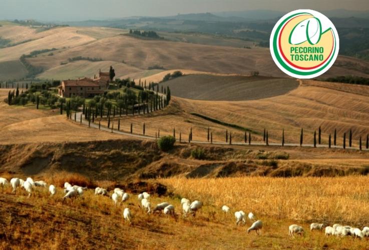 pecore-paesaggio-pecorino-by-maffei-renato-pecorino-toscano-dop-jpg