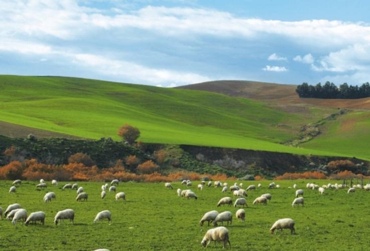 pecore-pascolo-pascoli-ovini-by-consorzio-pecorino-toscano-dop-jpg.jpg