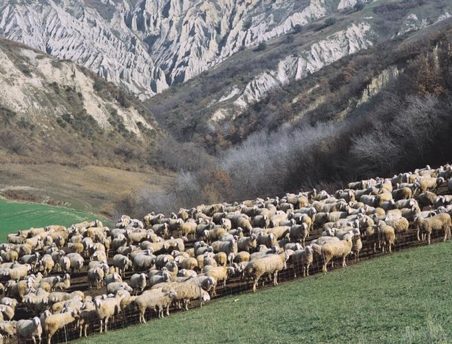 pecorepascologregge-ist-zooprof-teramo