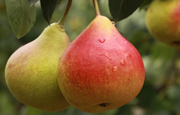 Pero: qualità e benefici prolungati nel tempo - le news di Fertilgest sui fertilizzanti