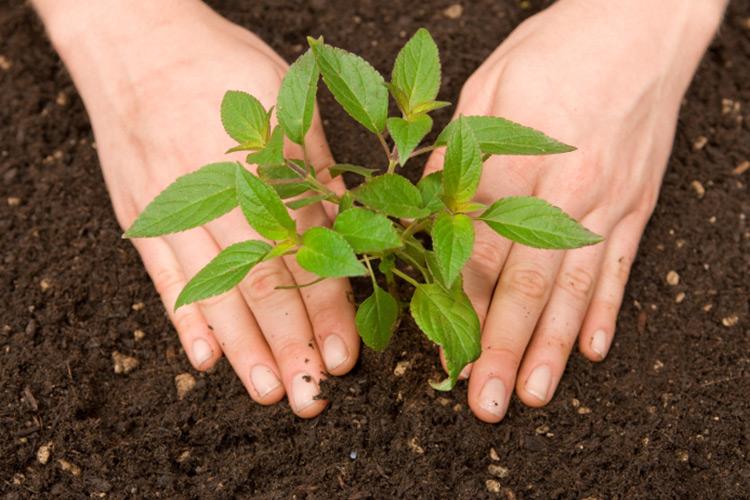 Gestione del rischio, assicurarsi per non avere sorprese - Plantgest news sulle varietà di piante