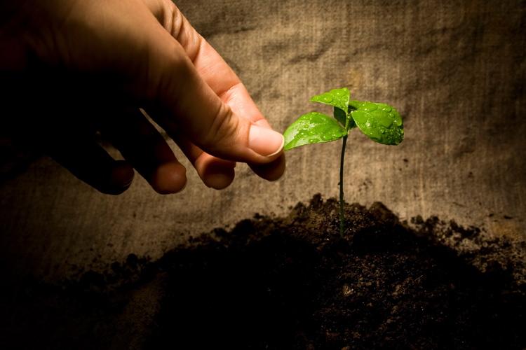 Concimazione di fondo, le fondamenta della produzione - Plantgest news sulle varietà di piante