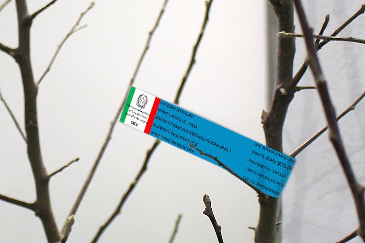 Vivaismo frutticolo, in Italia la qualità cambia pelle - Plantgest news sulle varietà di piante