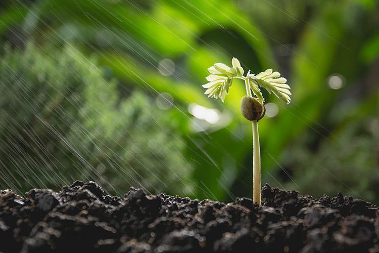 piantaterrafertirrigazionebyistockkirisa99750x500