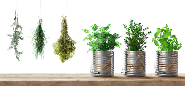 piante-aromatiche-erbe-aromatiche-by-aldecastudio-fotolia-750.jpeg