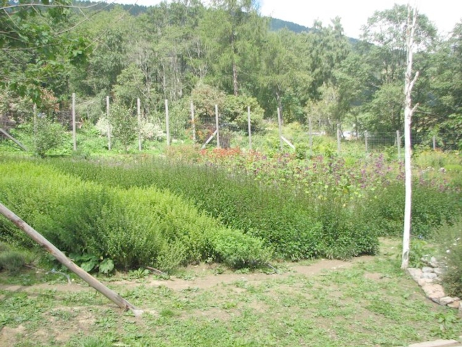 piante-officinali-2-fonte-fem.jpg