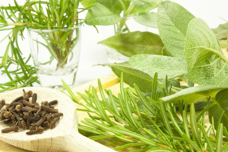 piante-officinali-aromatiche-by-darval-fotolia-750
