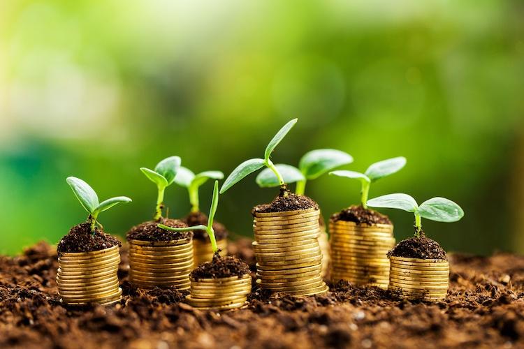 piante-piantine-monete-soldi-fiscalita-fisco-agricoltura-by-billionphotos-com-adobe-stock-750x500