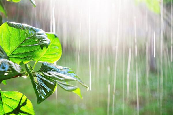 piante-pioggia-fonte-ilsa