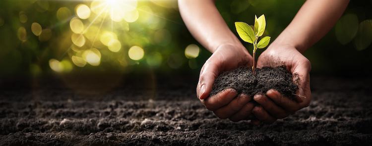 piante-protezione-piantina-mani-terreno-by-pasko-maksim-adobe-stock-750x295.jpeg