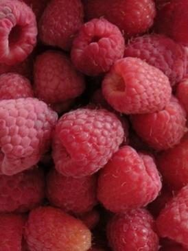 piccoli-frutti-lamponi-fondazione-minoprio
