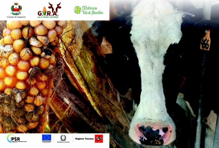 pif-gira-mucca-mais-loghi-by-michelangelo-becagli-jpg.jpg