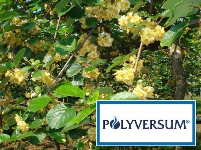 polyversum-kiwi-aprile-2020-fonte-gowan