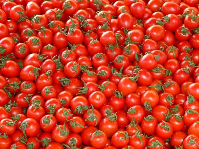 pomodori-fonte-confagricoltura-piacenza1