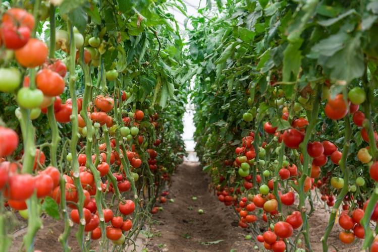 A ogni campo il suo - le news di Fertilgest sui fertilizzanti