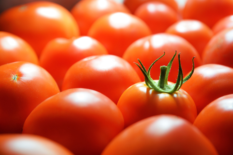 pomodori-pomodoro-byjuan-cistudio-adobestock-750x500