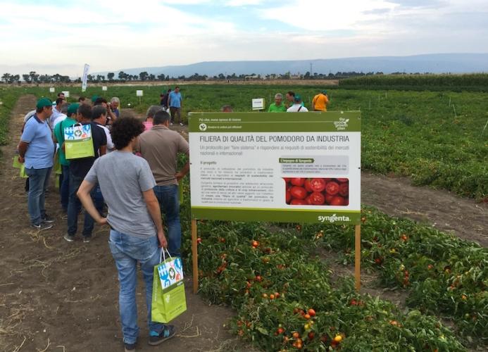 pomodoro-da-industria-filiera-partnership-syngenta-in-campo-orticoltura-e-valore-2016