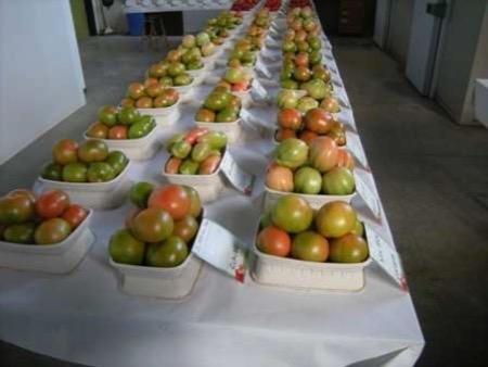 pomodoro-fonte-crpv