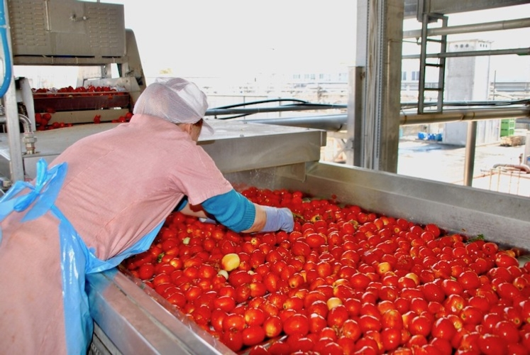 pomodoro-industria-fonte-op-nord-italia