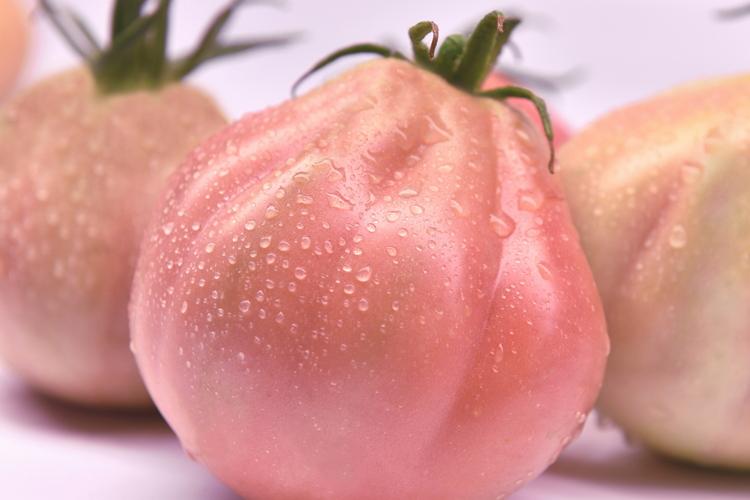 pomodoro-mensa-rosamunda-isisementi-byisisementi-750x500.jpg