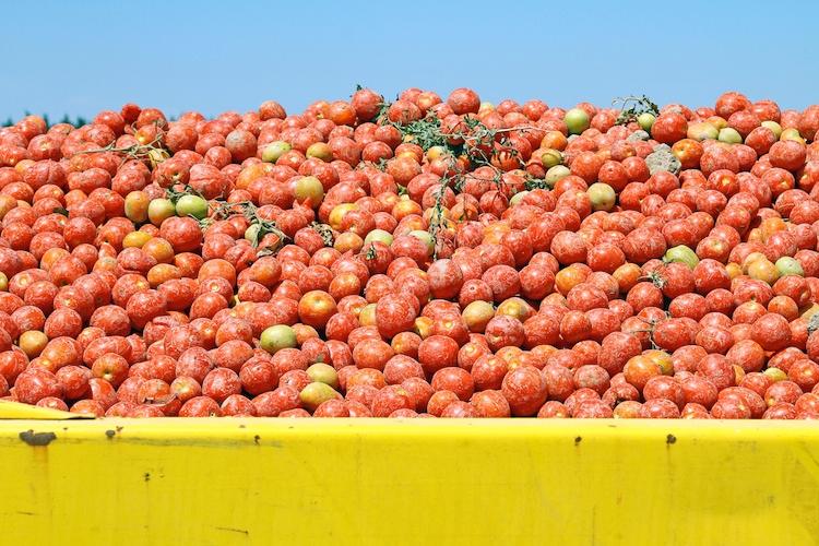 pomodoro-pomodori-by-illustrez-vous-fotolia-750.jpg