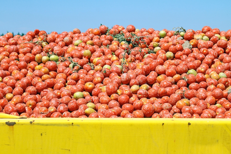 pomodoro-pomodori-by-illustrez-vous-fotolia-750