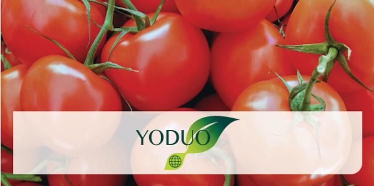 Fioritura al sicuro e protezione dagli stress abiotici con Yoduo<sup>®</sup> - le news di Fertilgest sui fertilizzanti