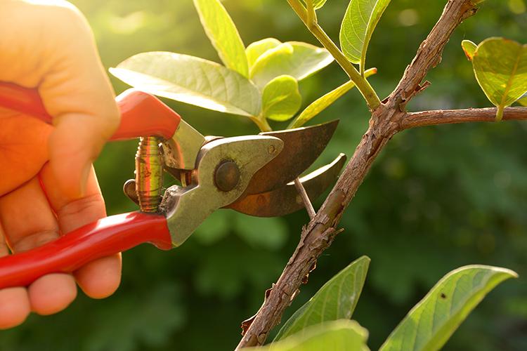 Potiamo le piante da frutto! Come? - Plantgest news sulle varietà di piante