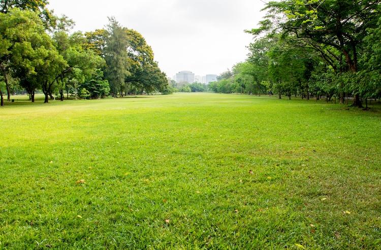 prato-verde-urbano-ambiente-sostenibilita-by-satit-srihin-fotolia-750