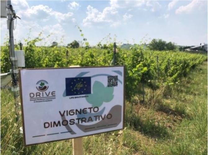 progetto-drive-life-speciale-relienza-vigneto-siccita-universita-dimostrazione-aziende-fonte-progetto-drive