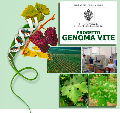 progetto-genoma-vite-fem-iasma