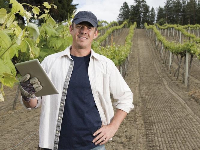 qdc-quaderno-di-campagna-viticoltore-22-9-2014.jpg