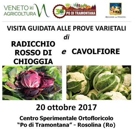 Radicchio rosso di Chioggia e cavolfiori: visite tecniche - Plantgest news sulle varietà di piante